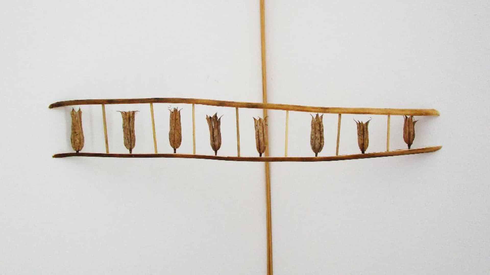 Mémoires de graines Alejandro Guzzetti