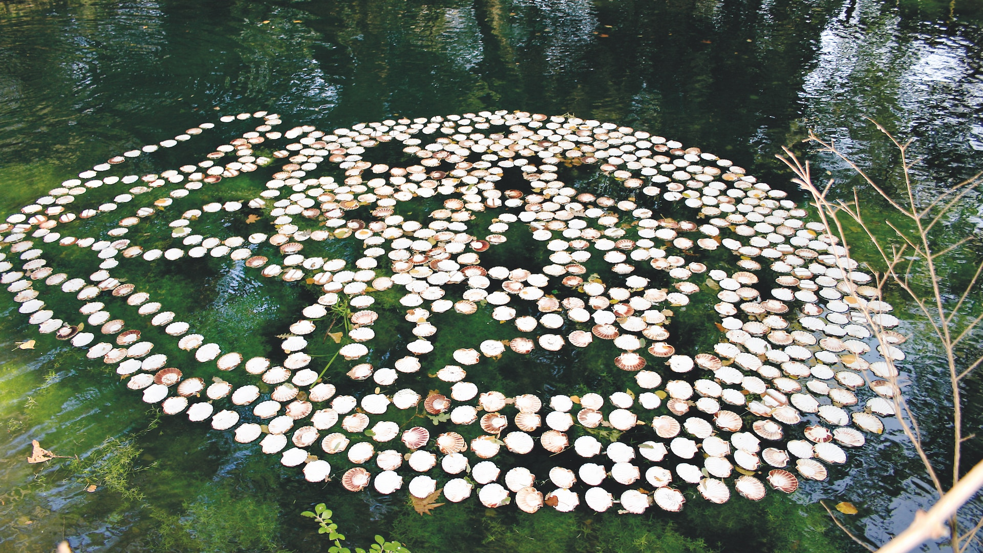 Installation Land Art Guzzetti Coquilles Saint Jacques