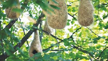 Nests Land Art Alejandro Guzzetti